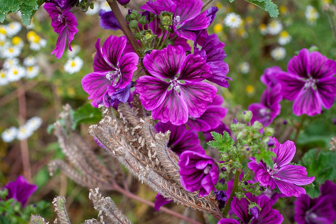 15_Im Garten der Hoffnung hört es niemals auf zu blühen